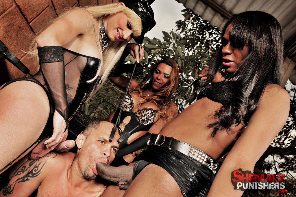 Shemale domination compilation porn pics